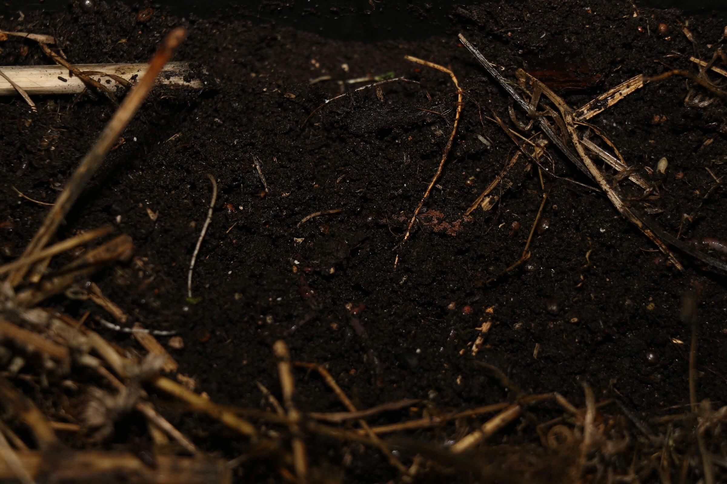 Die Würmer düngen den Boden