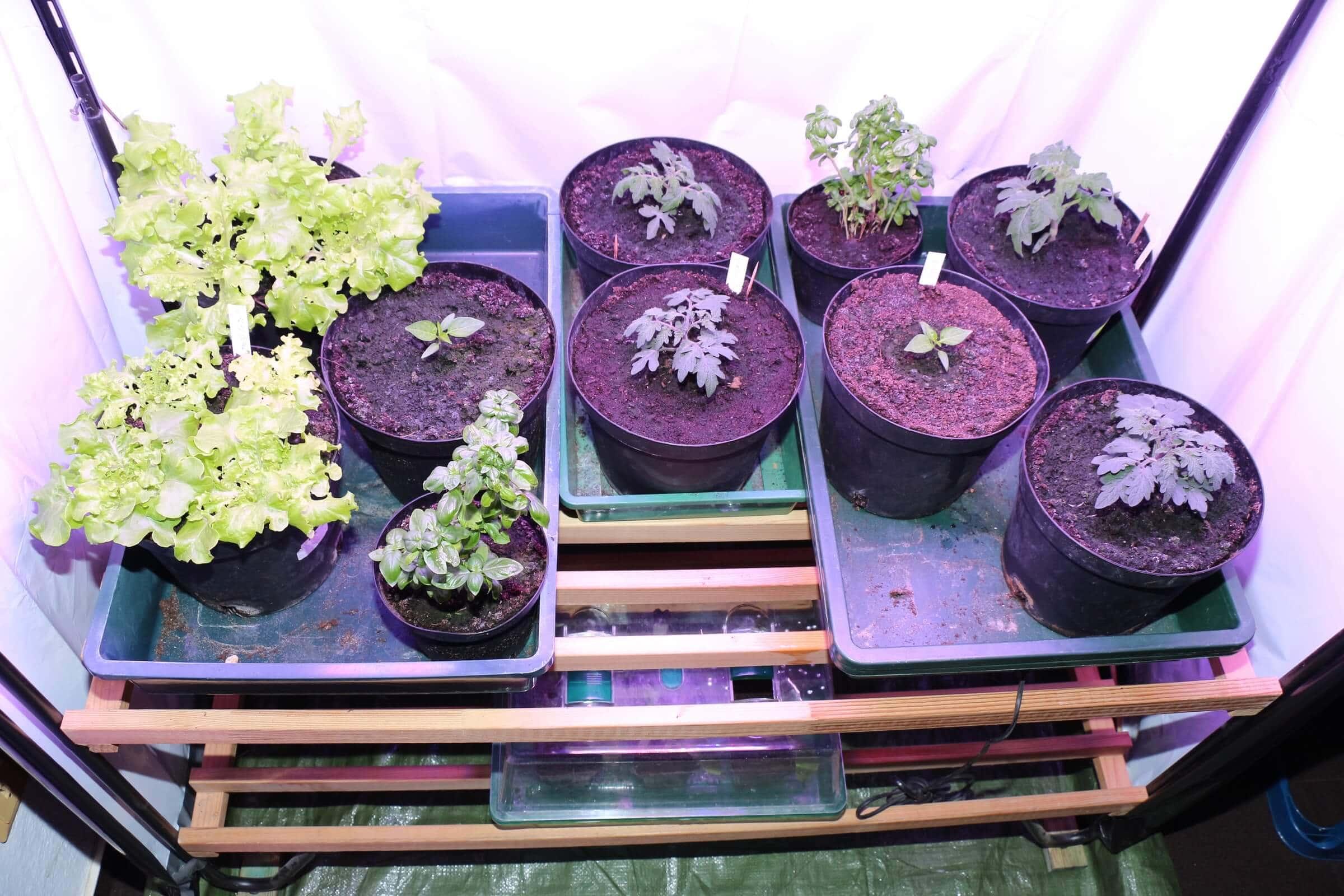 wurmhumus im test wachsen die pflanzen besser. Black Bedroom Furniture Sets. Home Design Ideas