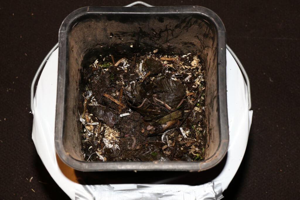 Hier wird die Wurmfarm gerade in Betrieb genommen, Marihuana Abfälle können anteilig beigefüttert werden