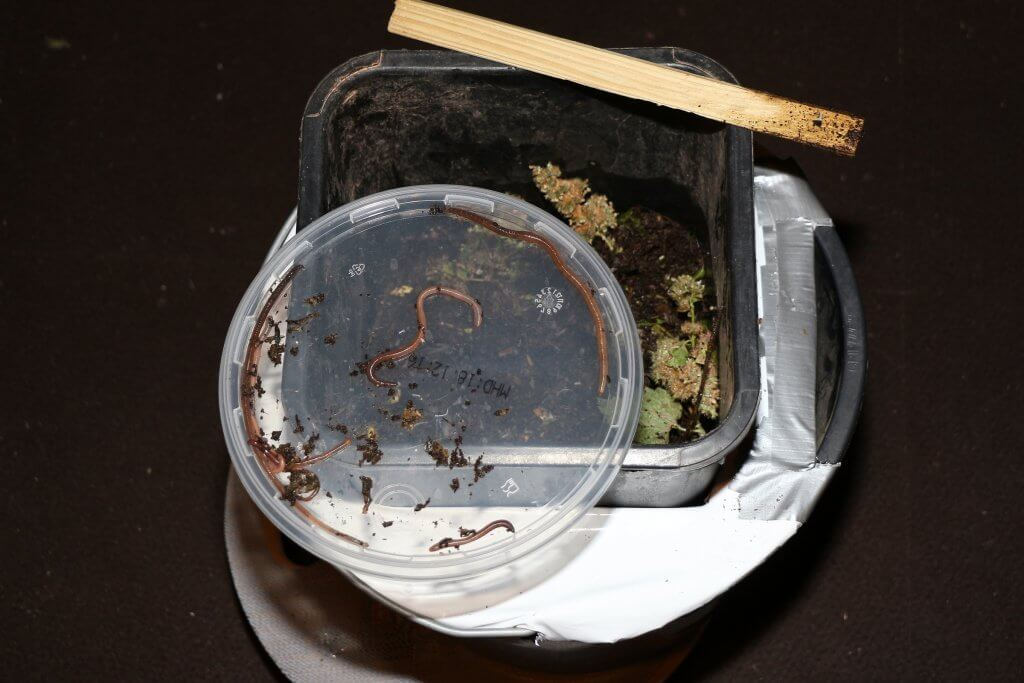 Kippende Wurmfarm retten - Erfolg