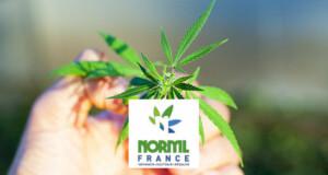 NORML France: Cannabis-Aktivisten in Frankreich