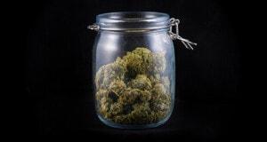 Der akute Mangel an Cannabisblüten in deutschen Apotheken hält an