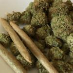 Ist der Cannabis-Rausch eine Frage der genetischen Veranlagung?