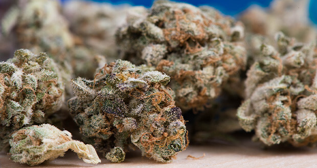 Stern-Diskuthek-Cannabis.jpg
